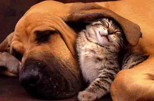 Small animal wellness at Rose Veterinary Hospital